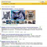 Выдача Яндекса Кострома Британские кошки