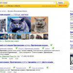 Выдача Яндекса Москва Британские кошки